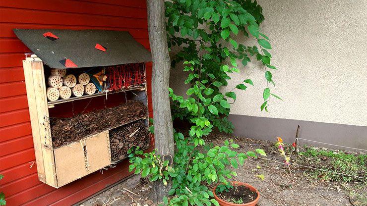 Da Bauen Wir Z.B. Ein Insektenhotel Und Säen Blumen.