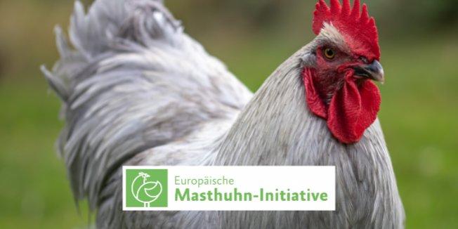 Studentenwerk tritt Europäischer Masthuhn-Initiative bei
